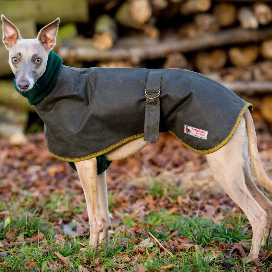 Coat for Whippets