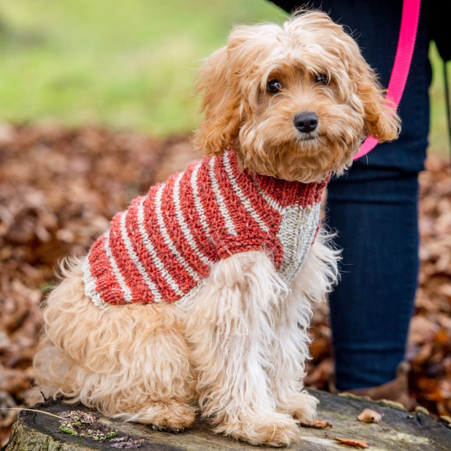 Dog Jumper Knit kit