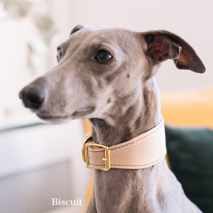 Whippet Collar - Biscuit