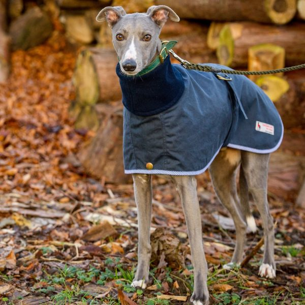 Two layer Whippet coat