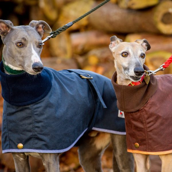 Double Layer Whippet Coat