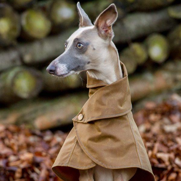 Wrap Around Whippet Coat