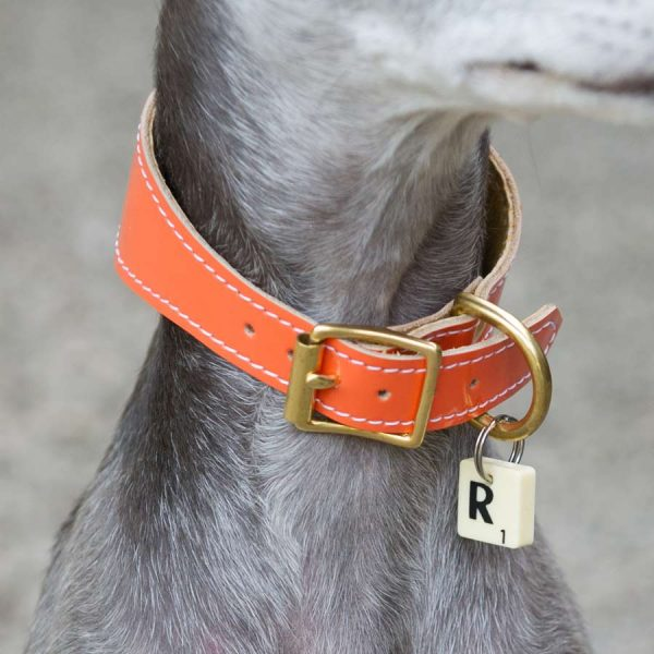 padded hound collar