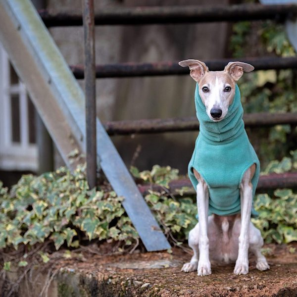 Fleece Jumper for Whippets in Duck Egg