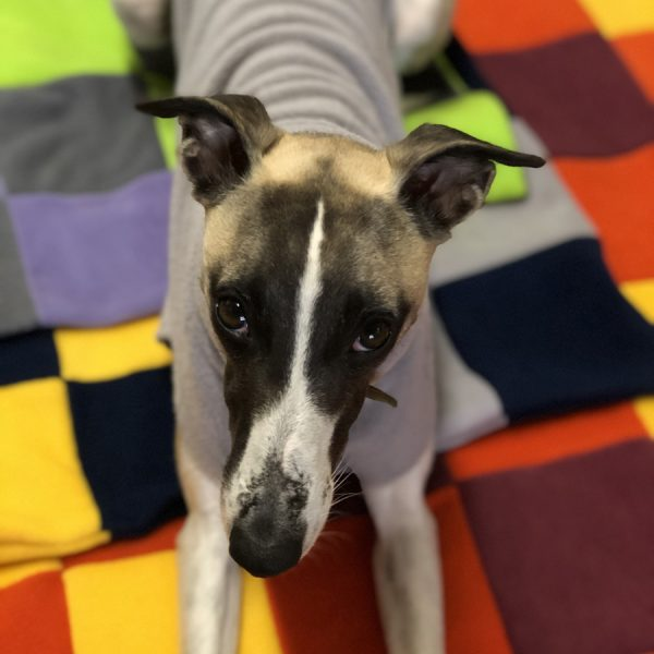 Patchwork fleece dog blankets - be as brave as you like with your colour choices