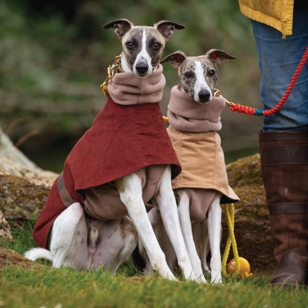 Hoxton Collarless Moleskin Coats for Whippets. Shown here in Rust and Camel, and layered with a soft Fleece Jumper in Camel