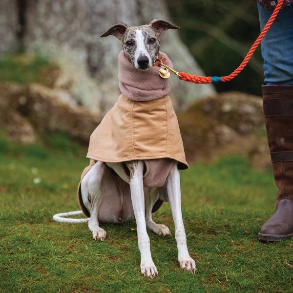 Hoxton Moleskin Whippet Coat in Camel with Fleece Jumper