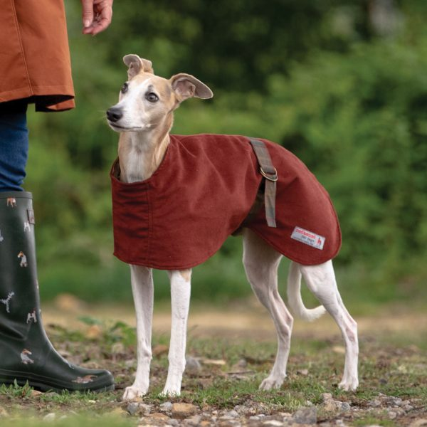 Hoxton Moleskin Whippet Coat in Rust