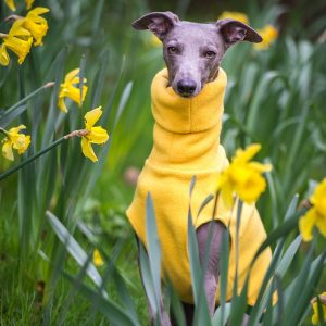 fleece jumper for whippets in yellow