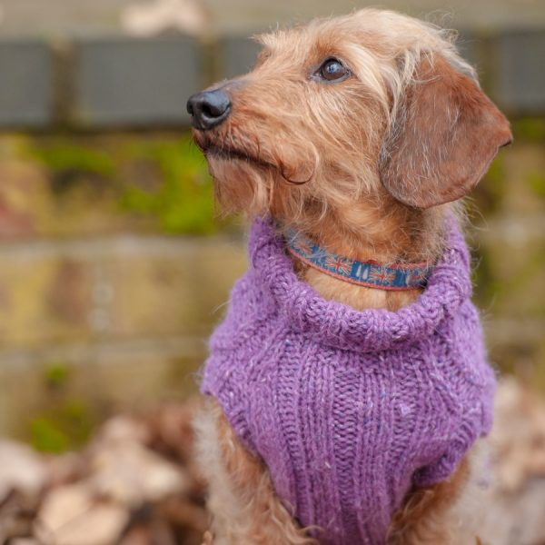 Hand knitted jumper for dachshund