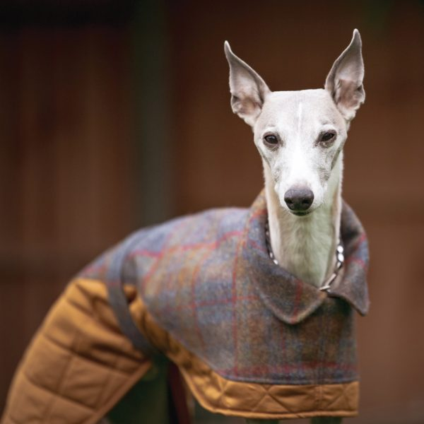 Mycroft Two-Tone Wool Whippet Coat