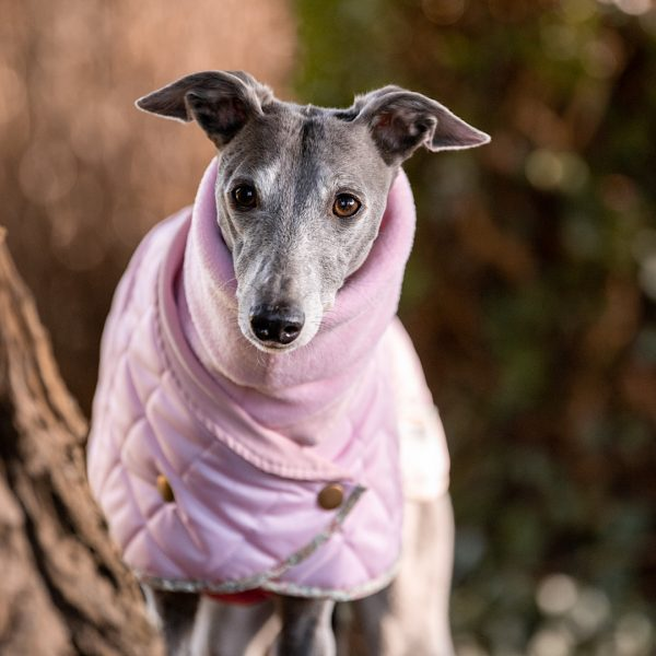 Norwich Harness Hole Coat in Baby Pink