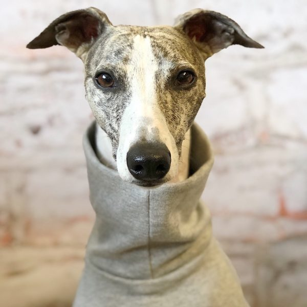 One Colour Tee Shirt for Whippets in Grey