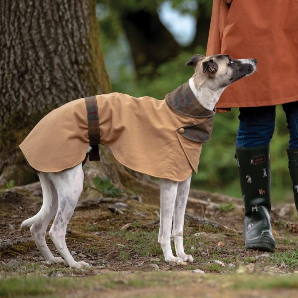 Shoreditch Moleskin Whippet Coat in Camel