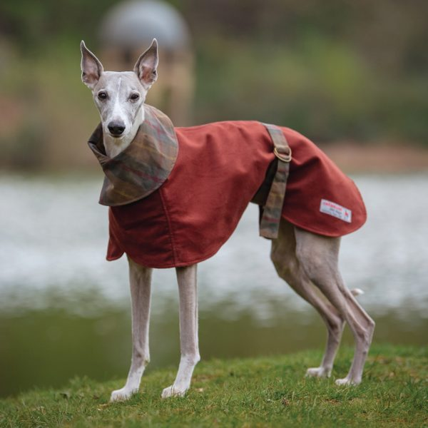 Shoreditch Moleskin Whippet Coat in Rust