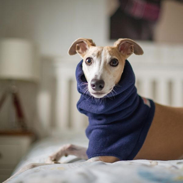 Fleece Snood for Whippets in Navy (from our Darks collection)