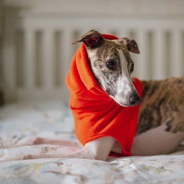 Fleece Snood for Whippets in Orange (from our Brights collection)