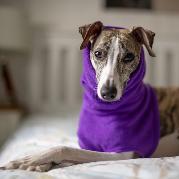 Fleece Snood for Whippets in Purple (from our Brights collection)