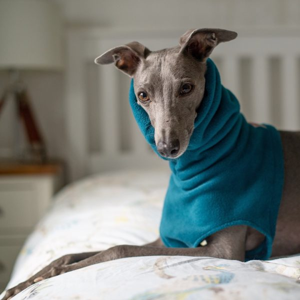Fleece Snood for Whippets in Teal (from our Darks collection)