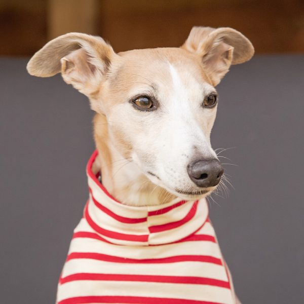 Stripe Tee Shirt for Whippets in Red with Short Neck