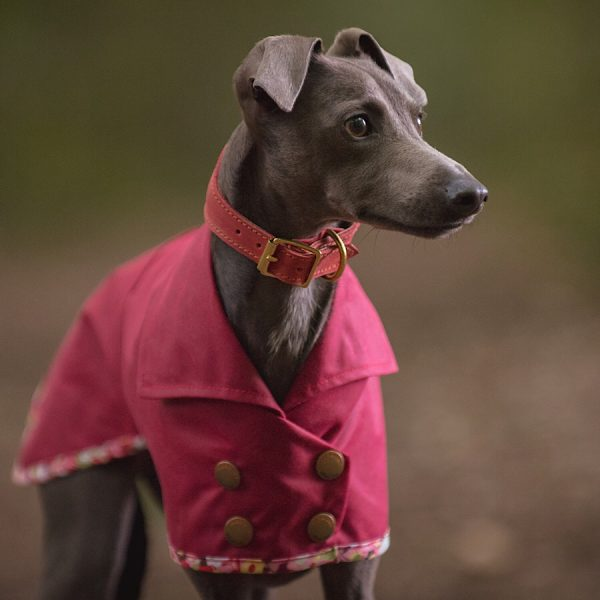 Waterproof wax cotton double breasted coat for whippets