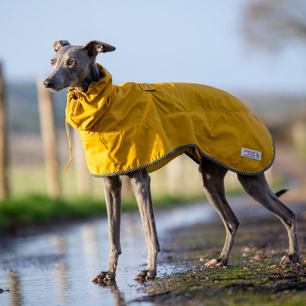 The Chester Coat in Yellow