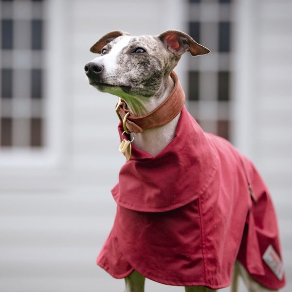 Wax Cotton Wiltshire Whippet Coat in Red