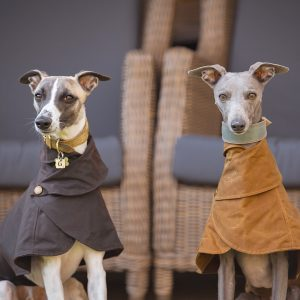 Wax Cotton Wiltshire Whippet Coats in Brown and Mustard