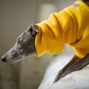 Fleece Snood for Whippets in Yellow