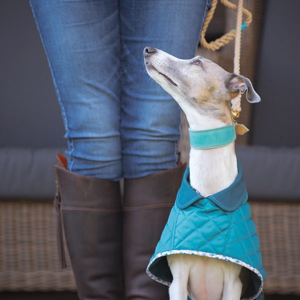 Yorkshire Washable Whippet Coat in Teal