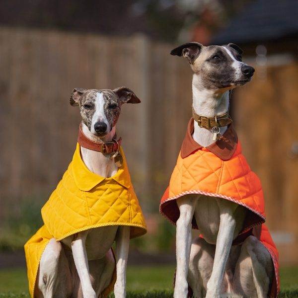 Yorkshire Washable Whippet Coat in Yellow and Orange