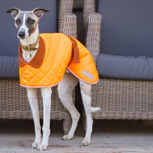 Yorkshire Washable Whippet Coat in Orange