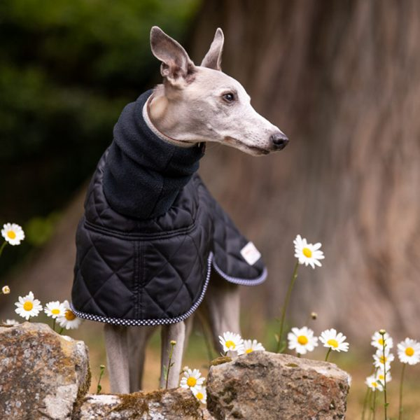 Canterbury Whippet Coat in Black