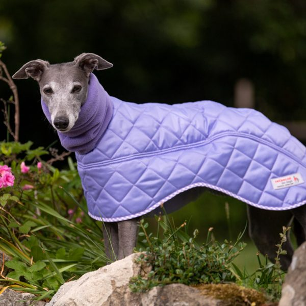 Canterbury Whippet Coat in Lilac