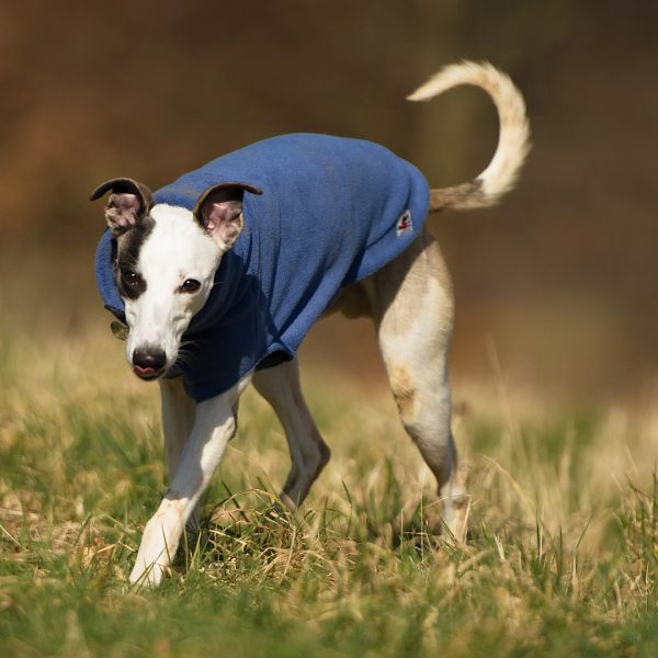 Fleece jumper for whippets in mauve