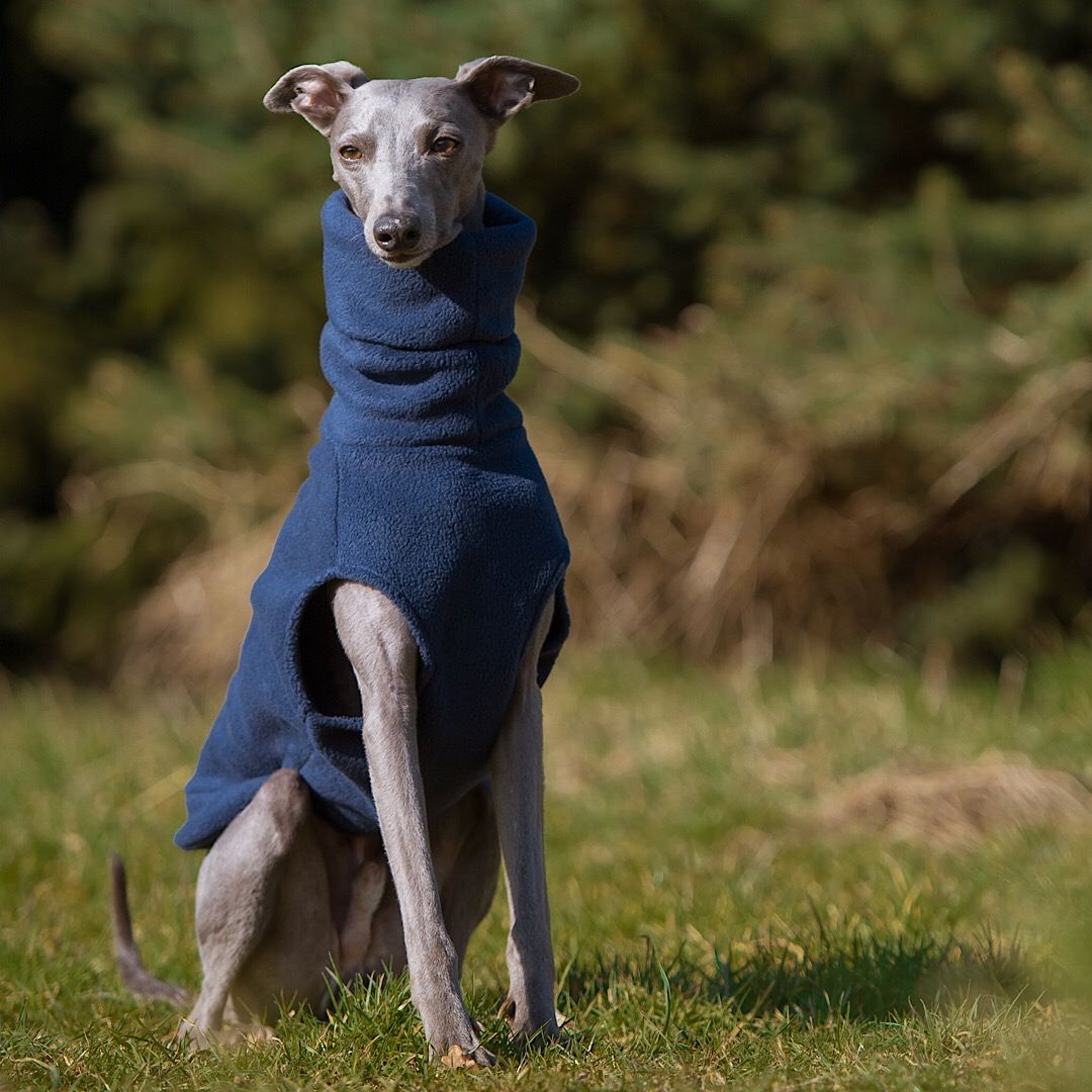 Standard Fleece Body Suit with Turtleneck for a dog  18 to 24  Great for whippets and similar sizes. Whippet size