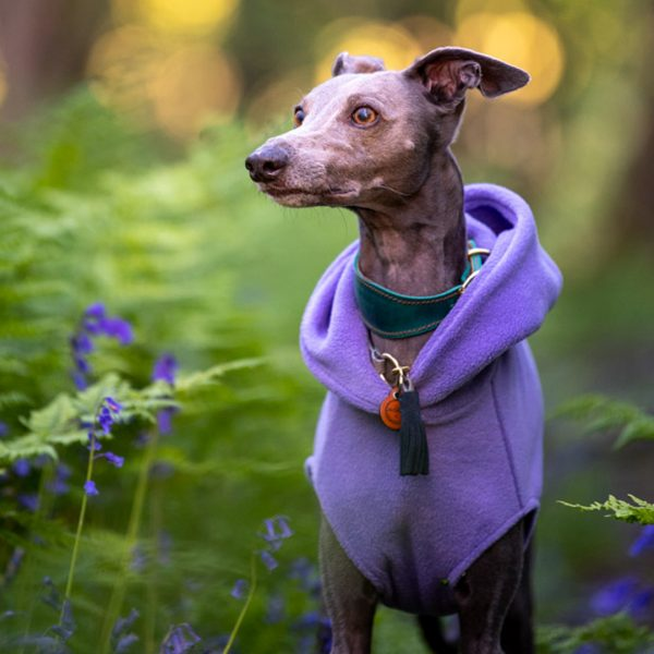 Fleece Hoodie for Whippets in Lilac