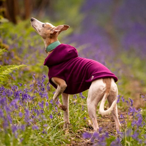 Fleece Hoodie for Whippets in Plum
