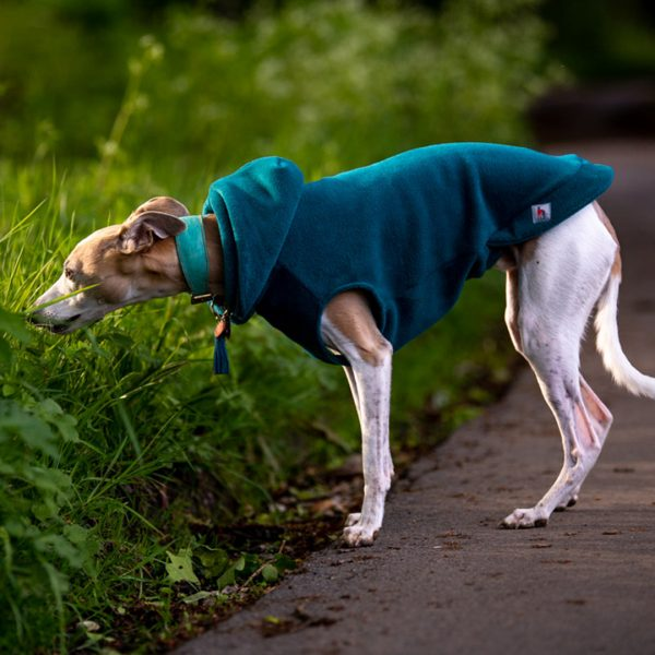 Fleece Hoodie for Whippets in Teal