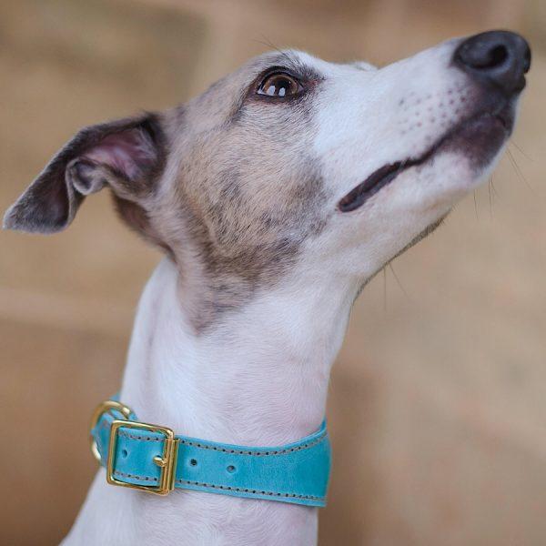 padded hound collar
