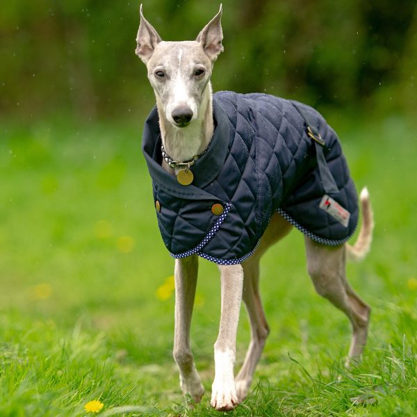 Norwich Coat for Whippets in Navy