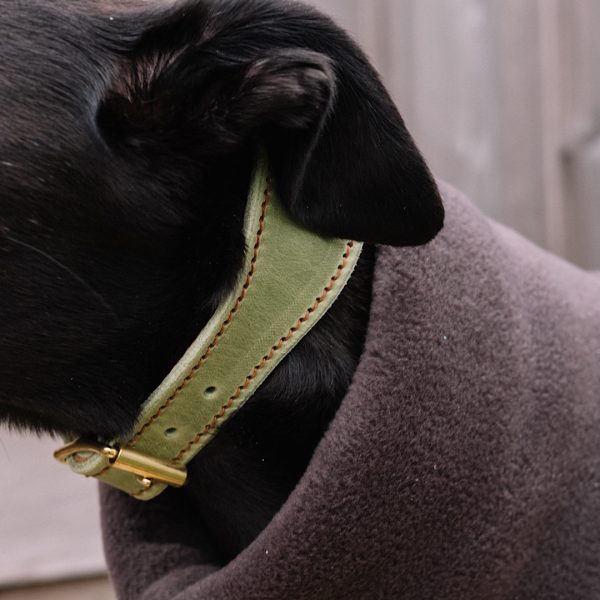 Leather Collar for Hounds in Pistachio