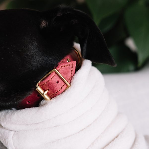 Leather Collar for Hounds in Raspberry