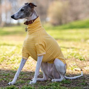 Legged Jersey Tee in Sun Sleek Stripe