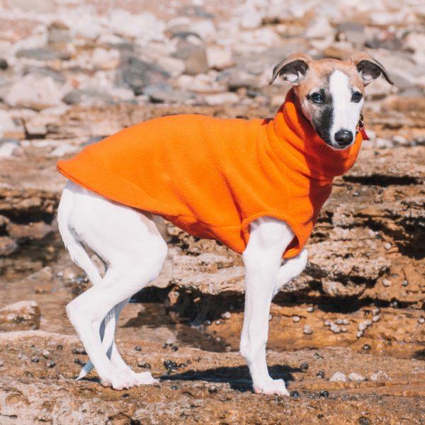 Puppy's First Fleece in Orange with Puppy's First Collar in Jaffa