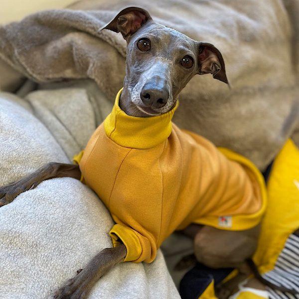 Pet-Shirt Whippet Jumper in Honey Yellow
