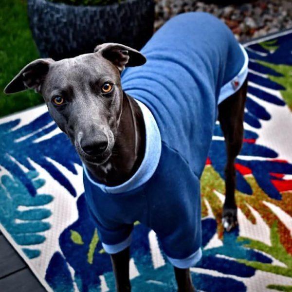 Pet-Shirt Whippet Jumper in Jeans Blue