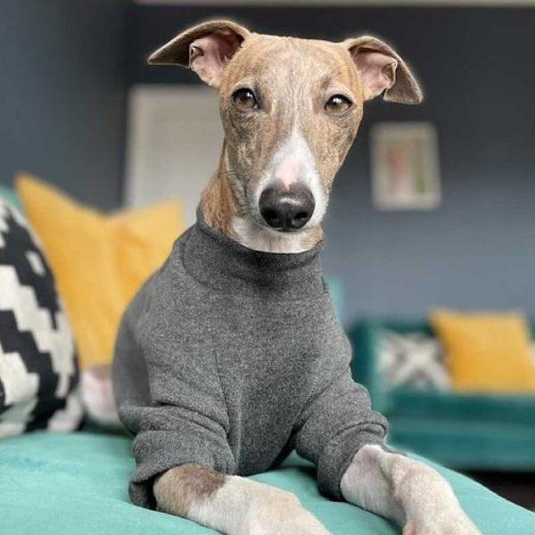 Pet-Shirt Whippet Jumper in Slate Grey