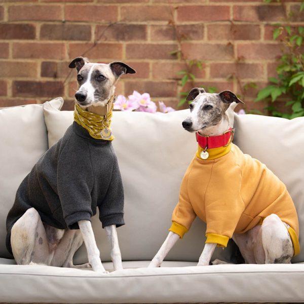 Pet Shirt in Slate Grey and Honey Yellow
